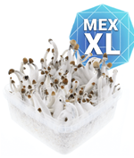 Mexican GrowKit - XL